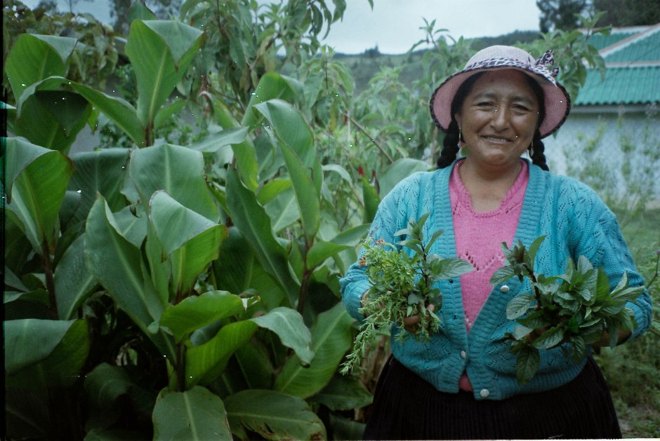 Señora Florinda harvesting the herbs cedrón, yerba buena negra, y paico in preparation for making an aguita (tea). Chilca Totora, Ecuador.