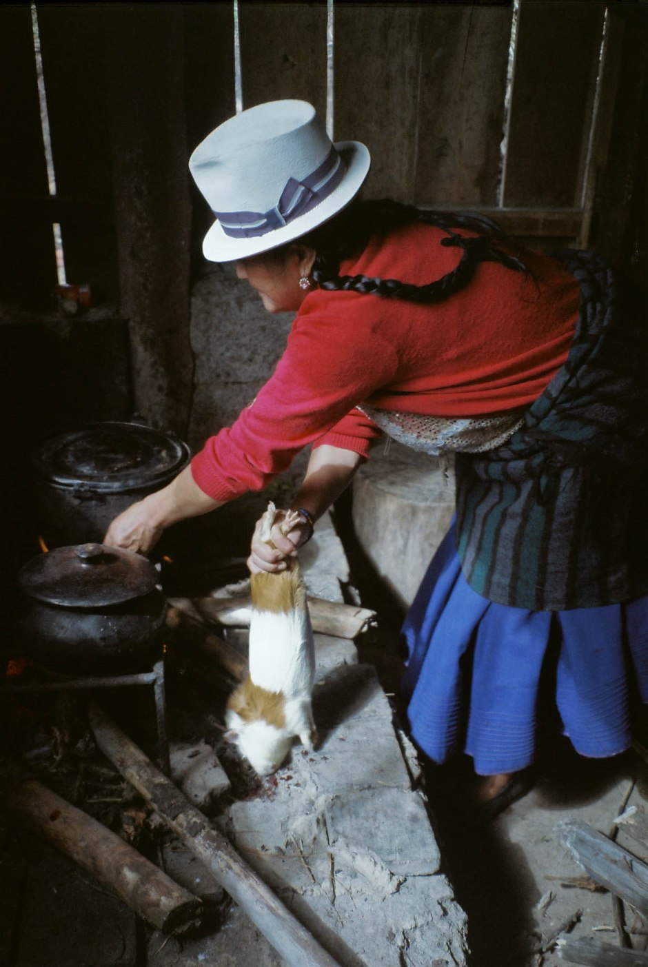 A compañera del campo (companion of the countryside) drains the blood out of a cuy (guinea pig) in preparation for cooking. Chilca Totora, Ecuador.
