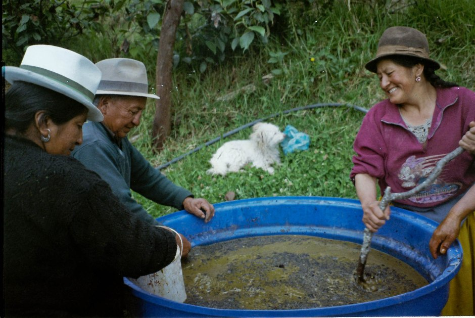 Learning how to make abono orgánico out of chicha (a fermented corn beer), leftover cheese curds, and manure. Chilca Totora, Ecuador.